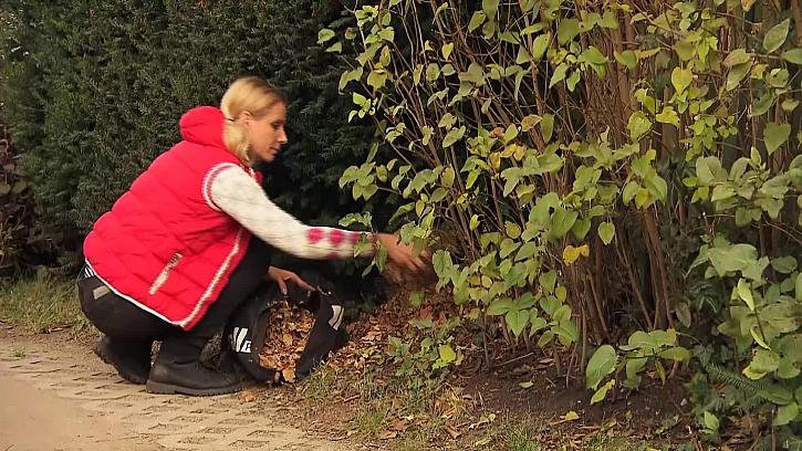 Sypání listí pod keř