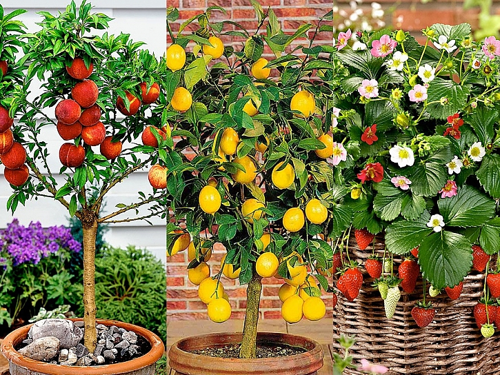 Ovocné stromky - vyberte si ten svůj v jarním katalogu Bakker
