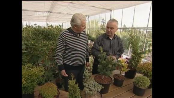 Pomalu rostoucí dlouhověké rostliny na balkón nebo terasu