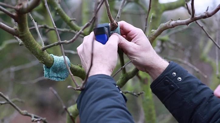 Dravý roztoč jako pomocník na zahradě