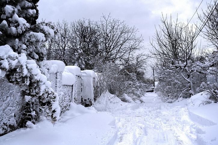 Sníh z cesty na zahradu také nahrňte, jen nesmí být posolený