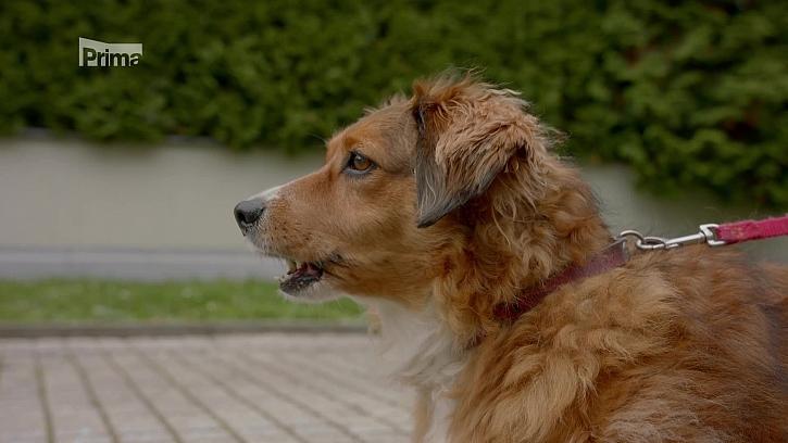 Jak se postarat o obézního psa a vrátit ho do normálu? (Zdroj: Obezita psa)