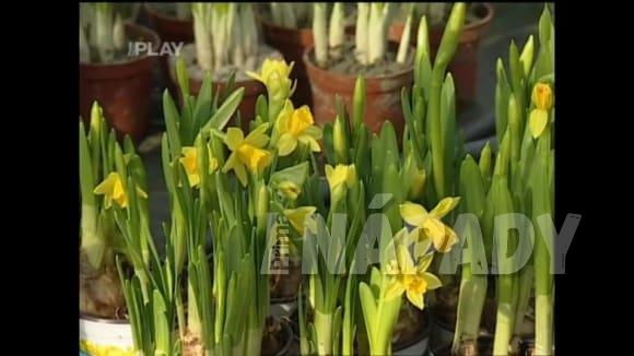 Co s odkvetlou květinou na jaře