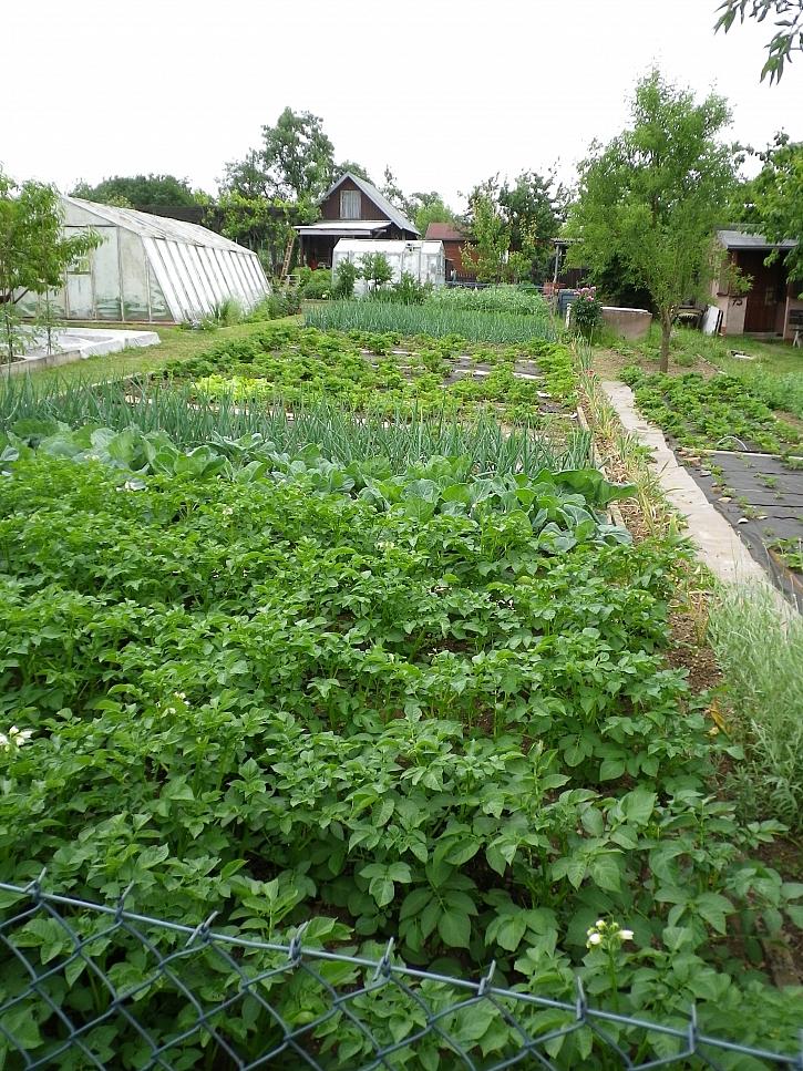 zeleninové záhony 2