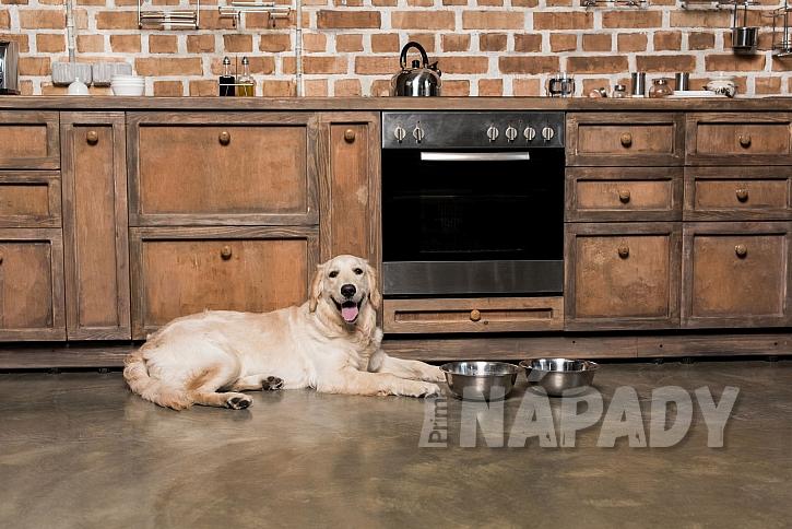 Pes v kuchyni