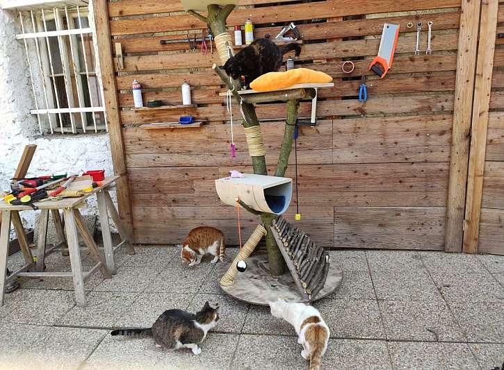 Vyrobte vašim kočkám kočičí strom, škrabadlo s prolézačkou (Zdroj: Prima DOMA)