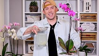 Česnekový životabudič pro orchideje, aby déle a lépe kvetly