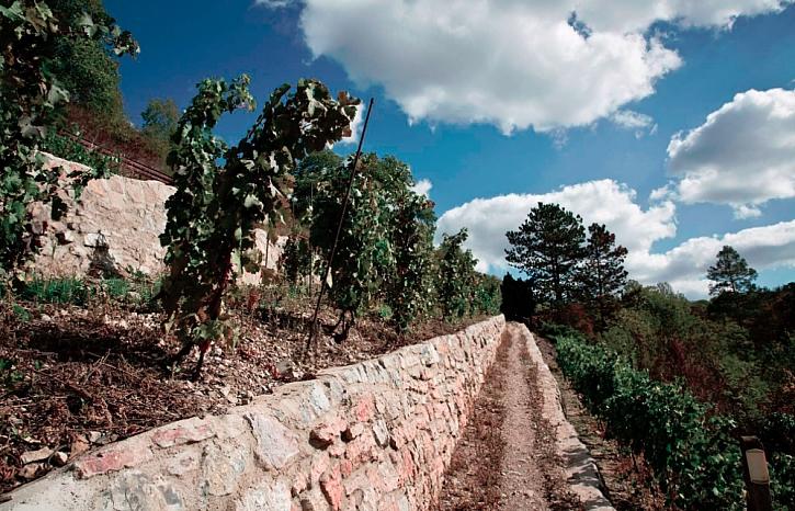 XXIII. Karlštejnské vinobraní