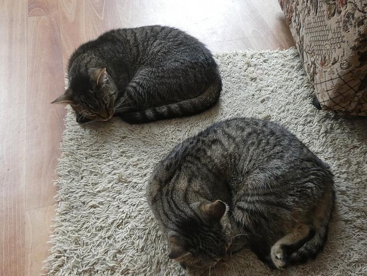 Dva ježci kočičí (Zdroj: Martina Pilzová)