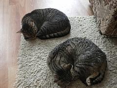Lze vychovat kočku, aby byla mazlivá?