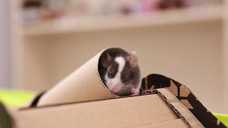 Jak vyrobit myší domeček z kartonu