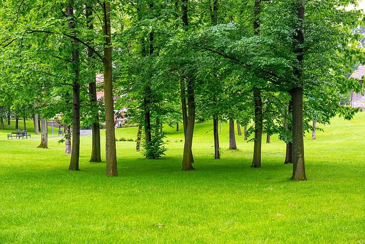 Motorové a akumulátorové vertikutátory HECHT vám zdokonalí trávník (Zdroj: Depositphotos)