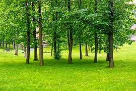Tipy na zahradní vertikutátory Hecht