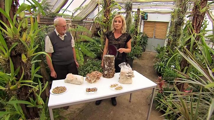 Víte, že dřevokazné houby jsou nám naopak prospěšné?