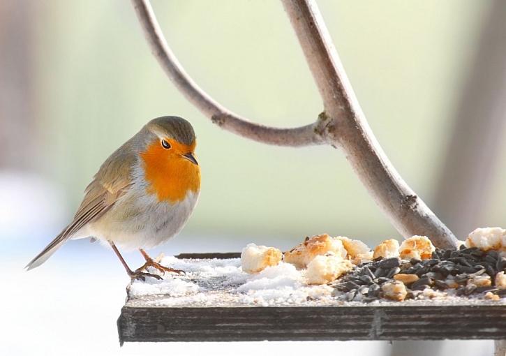 Krmíte v zimě ptáčky? (Zdroj: Depositphotos)