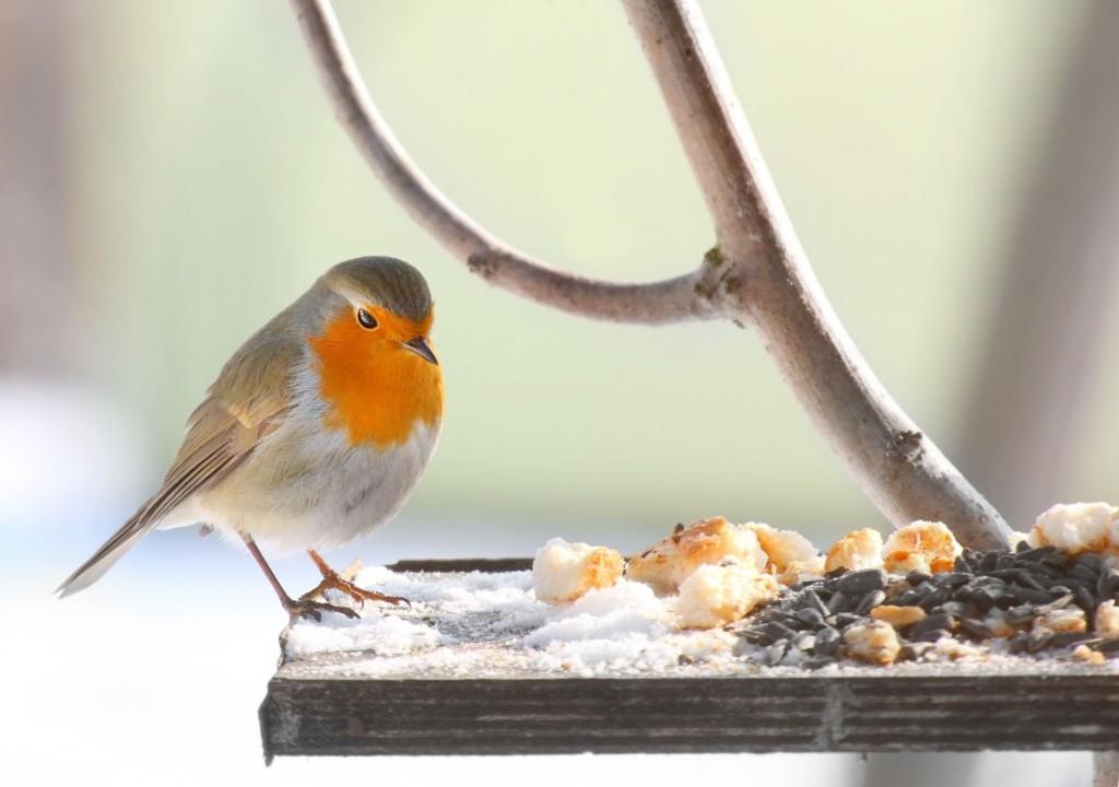 Krmíte v zimě ptáčky?