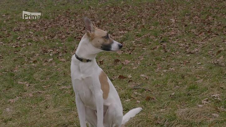 Víte, jak se sžít se psem z útulku? (Zdroj: Pes z útulku)
