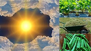 Předpověď počasí na první červencový víkend: Rychlé rady do zahrady