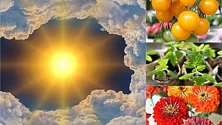 Předpověď počasí na třetí květnový víkend: Co dělat na zahradě