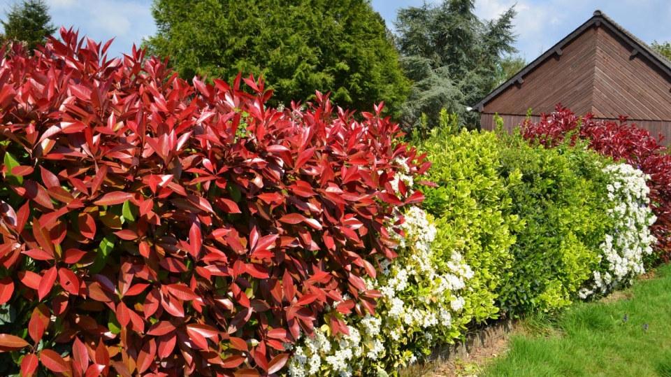 Rozhodli jste se pro živý plot? Seznam vhodných rostlin se může hodit!