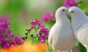 Holubi nejsou jen obtížní ptáci. Chovejte je a poznejte jejich krásu