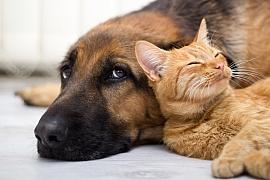 COVID-19 a domácí zvířata