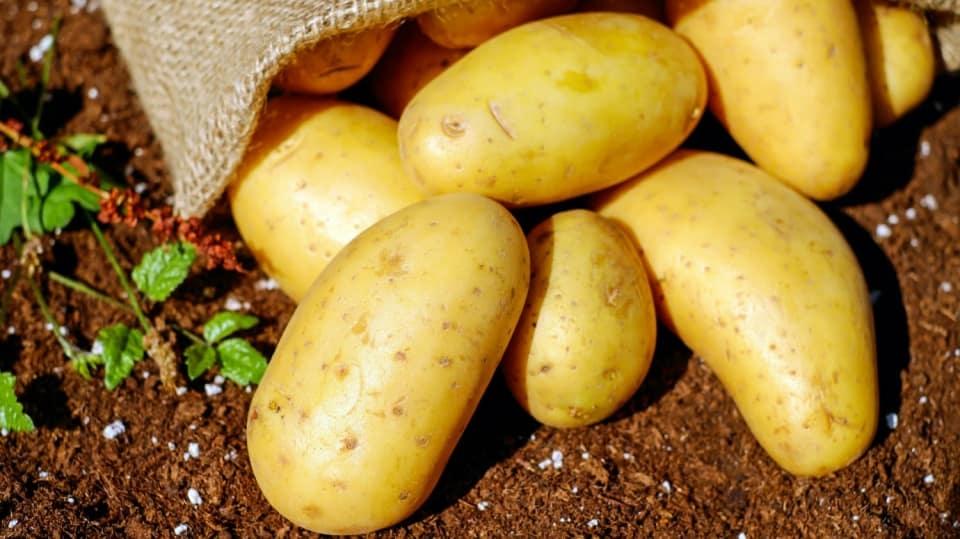 Jak si přirychlit sadbu aneb brambory jako vejce