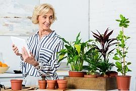 Důležitá péče o pokojovky po zimním období a záchrana zanedbaného avokáda v květináči