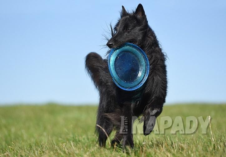 Jak zabavit aktivního psího kamaráda 1