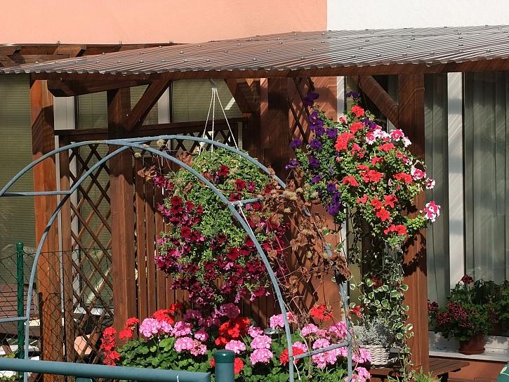 Závěsné květináče pod pergolou