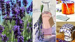 Květy levandule nejsou jen léčivé, ony jsou i jedlé! Zkusíte sirup, nebo raději džem?
