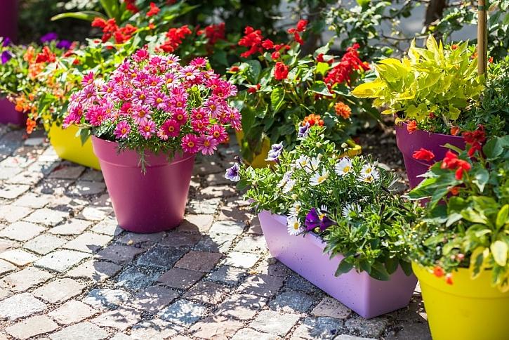 V sortimentu květináčů můžeme vybírat z různých materiálů, barev i tvarů