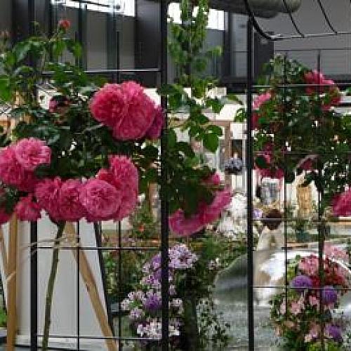 Růžová zahrada 2020