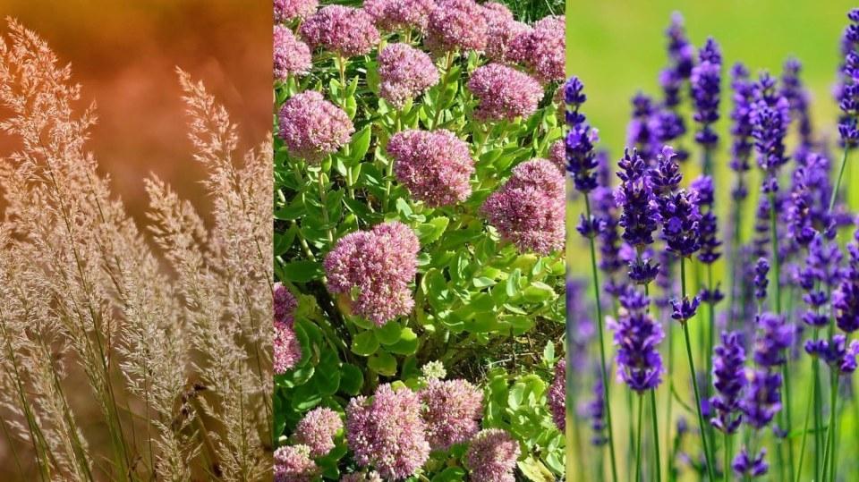 Jarní střih trvalek, travin a polokeřů