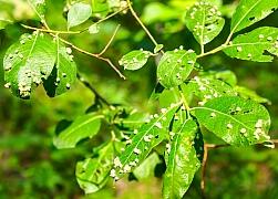 Ochrana rostlin v biozahradě bez použití chemie
