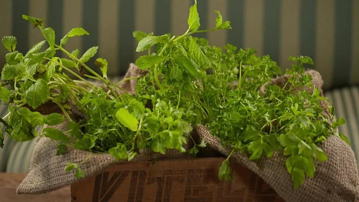 Jak mít po ruce neustále čerstvé bylinky