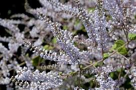 Trpíte bolestmi hlavy či migrénami? Tato rostlina vám pomůže!
