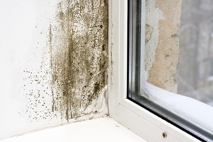 Plíseň se často objevuje u oken