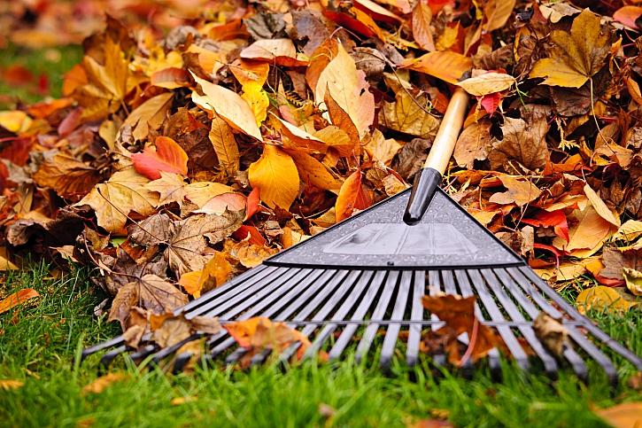 Hrabání listí vějířovitými hráběmi