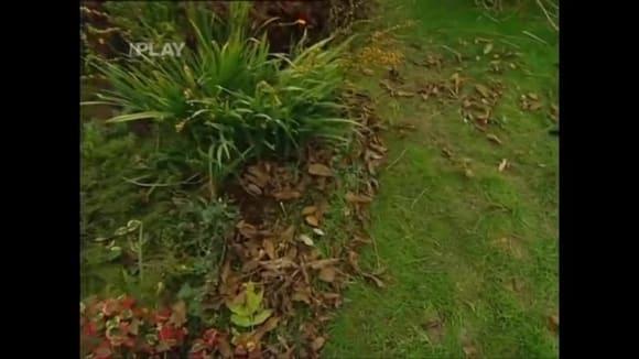 Využití spadaného listí v okrasné zahradě