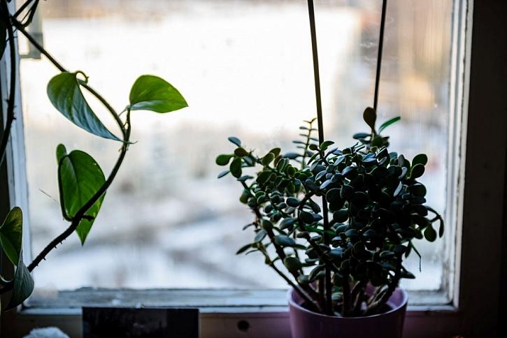 Přes zimu nehnojte, v létě úměrně a podle druhu rostliny