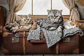 Když kočky vyrazí na cesty