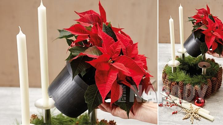 Přírodní adventní věnec: věnec dozdobte poinsettií, cesmínou a vánočními ozdobami