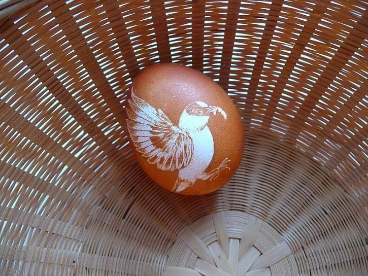 Velikonoční tip z Podřipska – zdobení vajíček duší jezerní sítiny