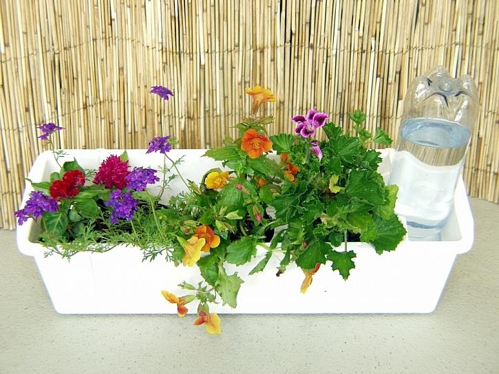 Závlahový systém pro pokojové rostliny – aby květiny nežíznily