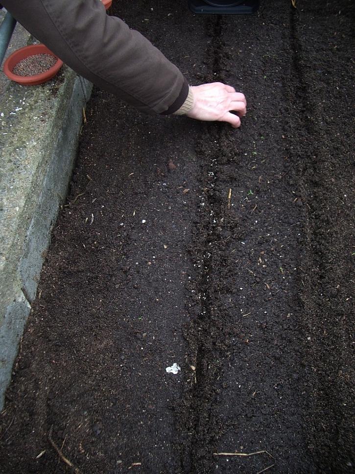 Výsev semen do řádků v pařeništi