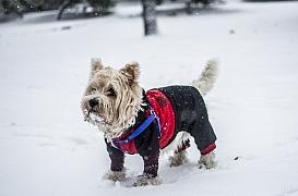 Oblečení pro pejsky: Chraňte své mazlíčky v mrazech před prochladnutím