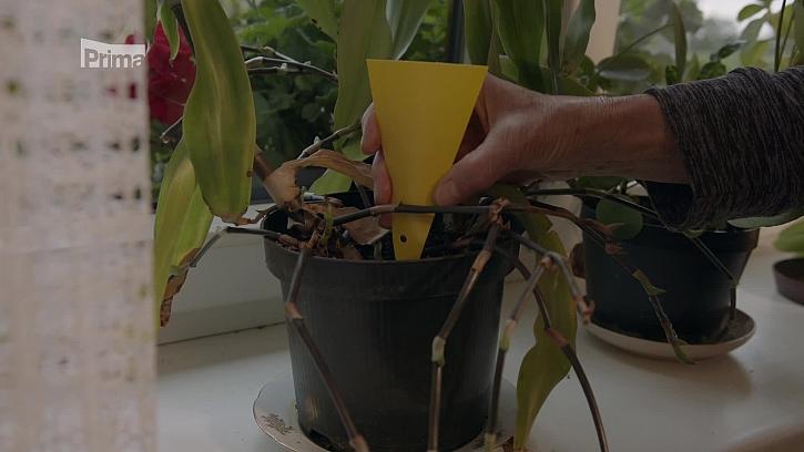 Ochrana před škůdci rostlin i stromů