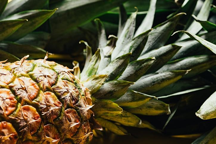 ANANAS (Ananas Comosus)