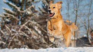 Jak se v zimě postarat o psa, aby přežil mráz ve zdraví